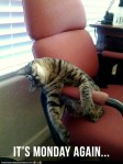 funny-pictures-i-know-those-feels-monday-cat