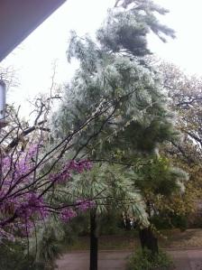 April Ice pine tree 680