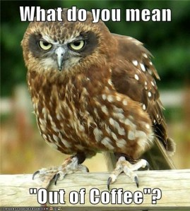 lolpics-coffee owl