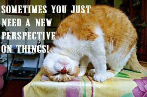 lolcat perspective