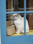 NOLA shop cat