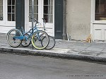 NOLA street cat