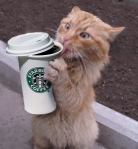 coffee-crack-cat