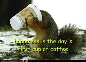 Coffee squirrel