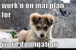 wurkn-on-mai-plan-for-word-domination-caleb-pup