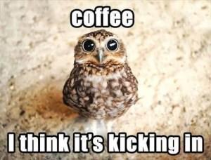 Coffee works - owl