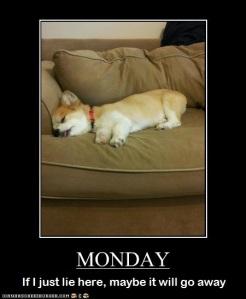 loldog Monday Pup2