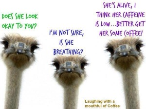 Coffee Ostriches