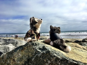 Mooney and Blue checking out the beach